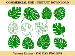 Monstera Leaf SVG